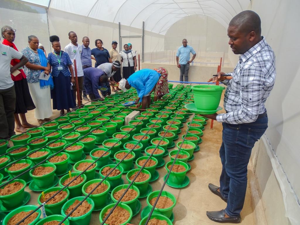 Workshop on Improving Quality, Quantity and Availability of Sweetpotato Planting Material Through SANDPONICS Technology at TARI UKIRIGURU