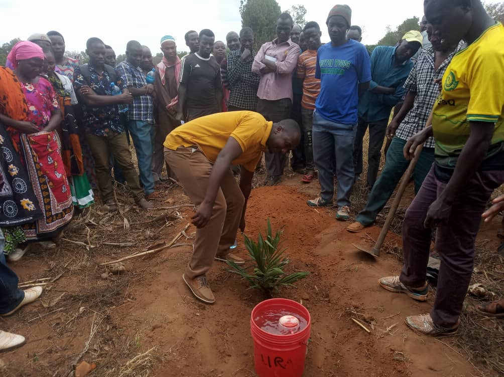 A practical Training to farmers  on how to plant Oil Palm seedlings.