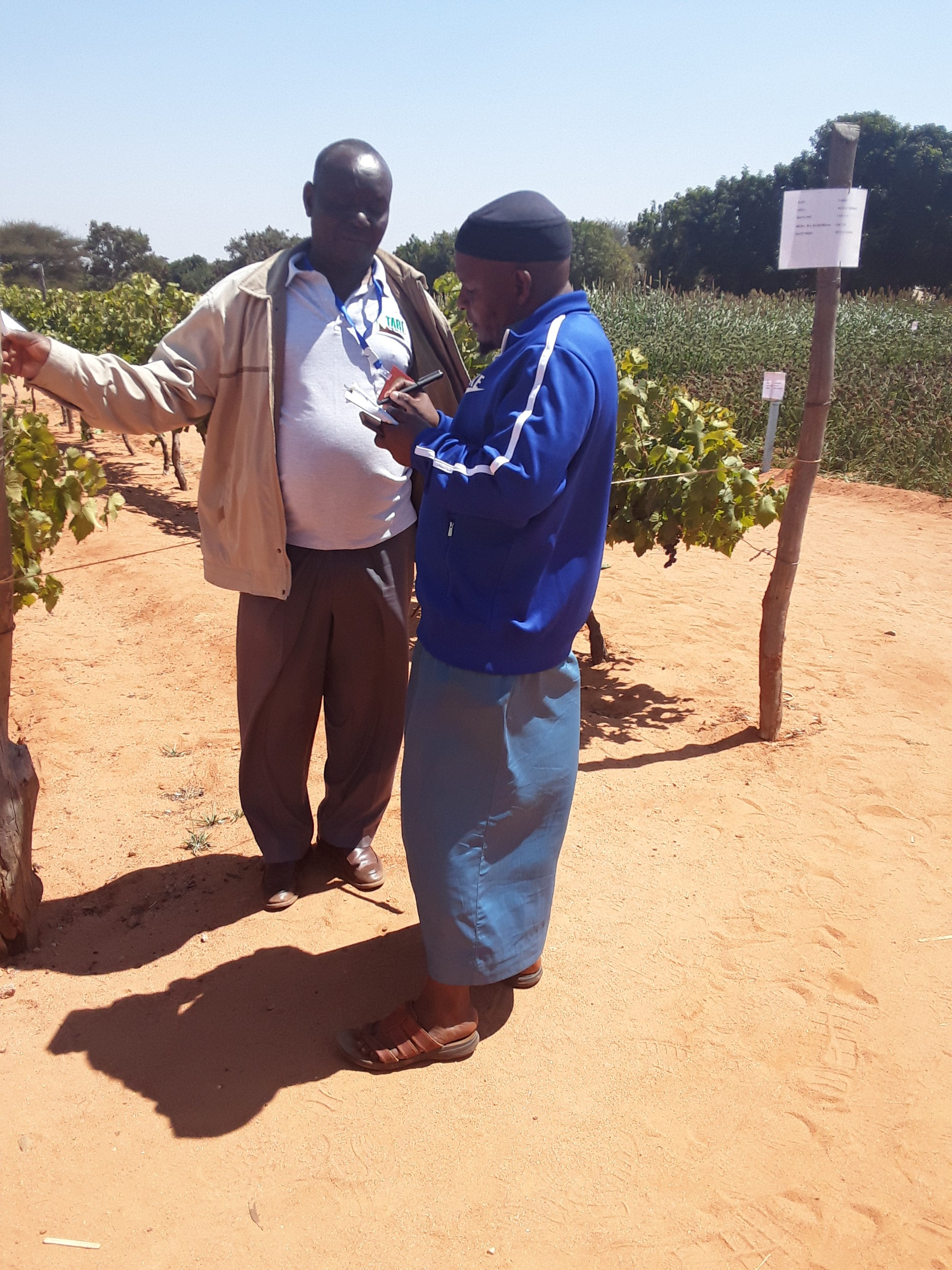 A researcher -Chengerle Mrema  giving explanation on grapes  agronomical husbandry to a farmer during  Nanenane Agricultural show at Nzuguni Dodoma demonstration plot