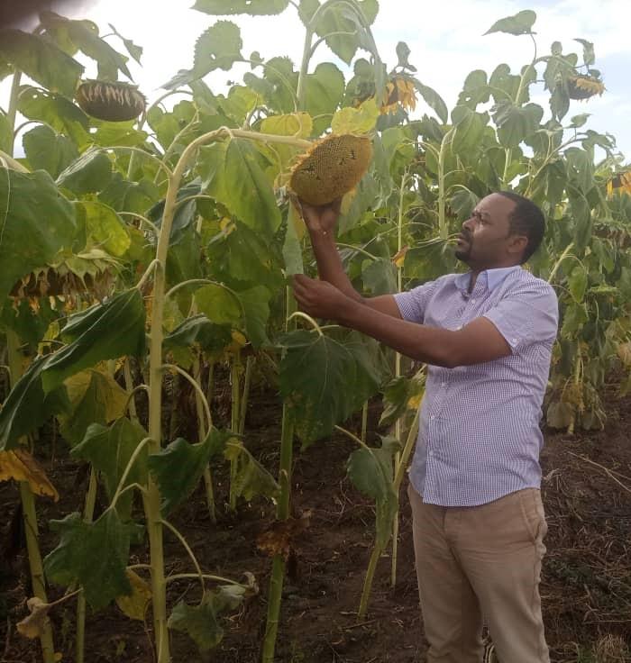 A scientist Mr. Ismail Ngolinda, at TARI Ilonga seed multiplication field