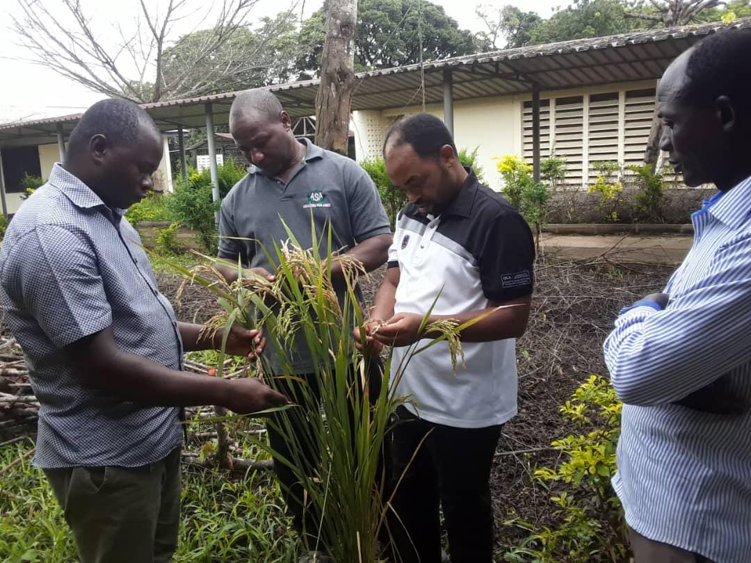 TARI-IFAKARA Scientists helping a farmer to diagnose diseases on Rice