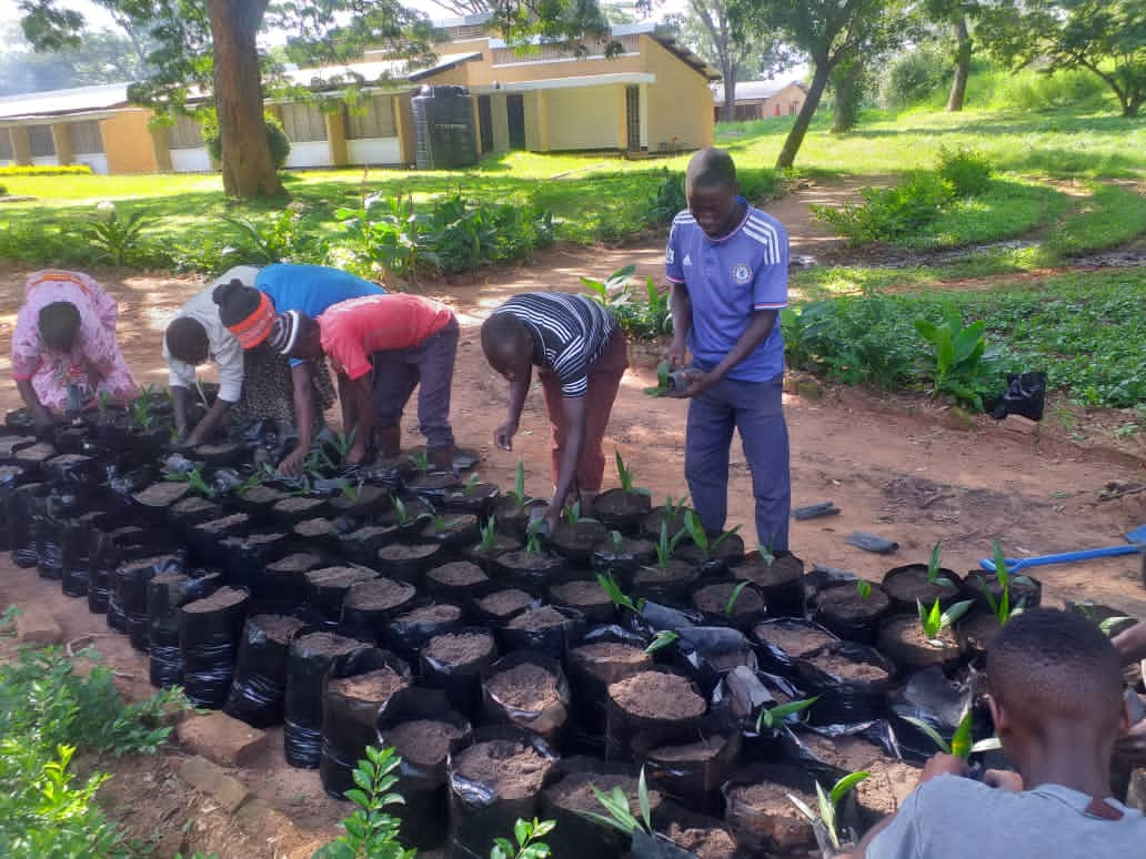 Transplanting Oil palm seedlings from Primary nursery to Secondary nursery at TARI Tumbi.