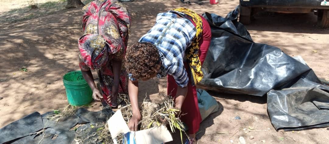TARI Kihinga has continued to distribute oil palm pre-germinated  seeds to farmers
