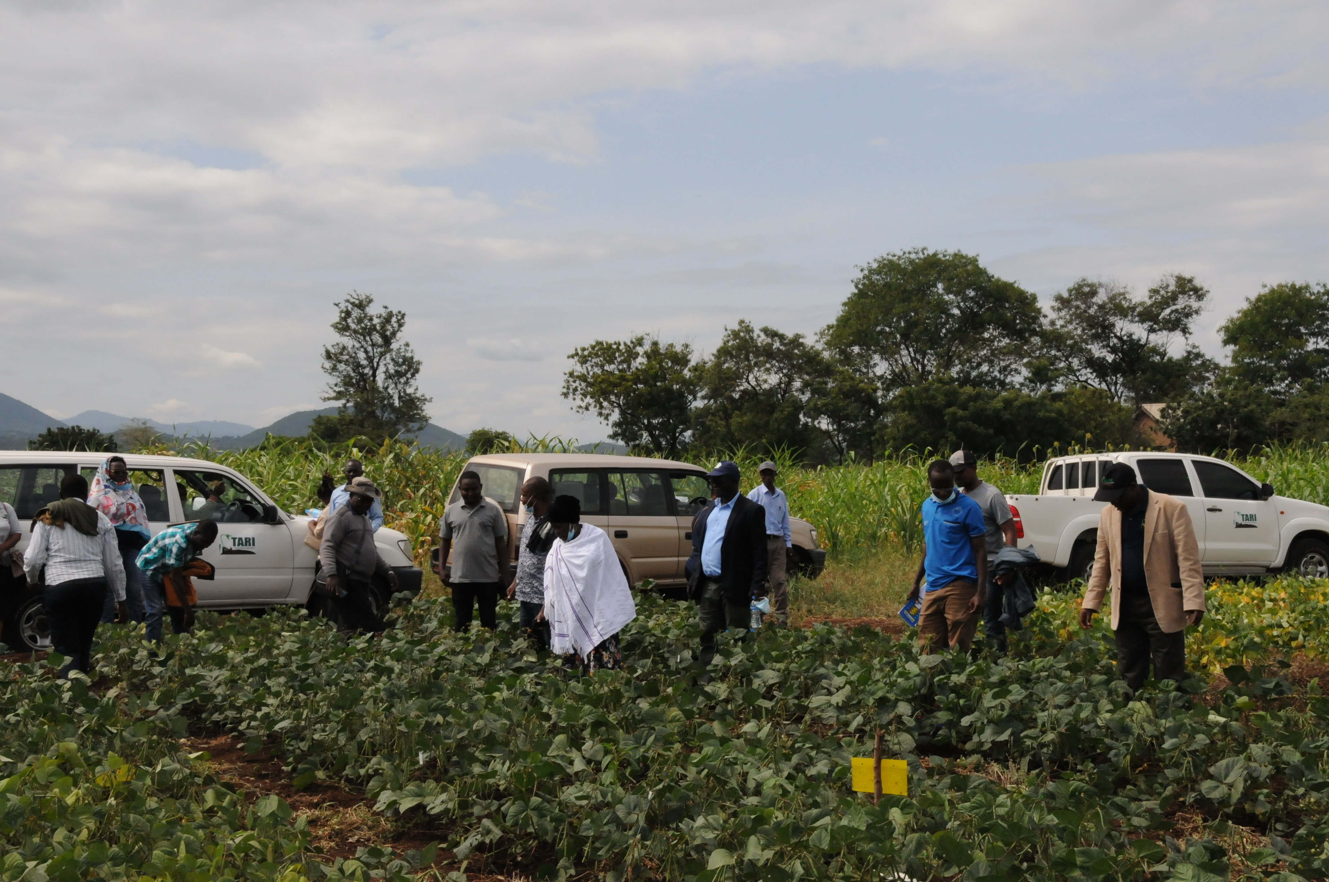 TARI Selian management visiting Mung4-Fe Project trial and seed multiplication site at Miwaleni-Moshi
