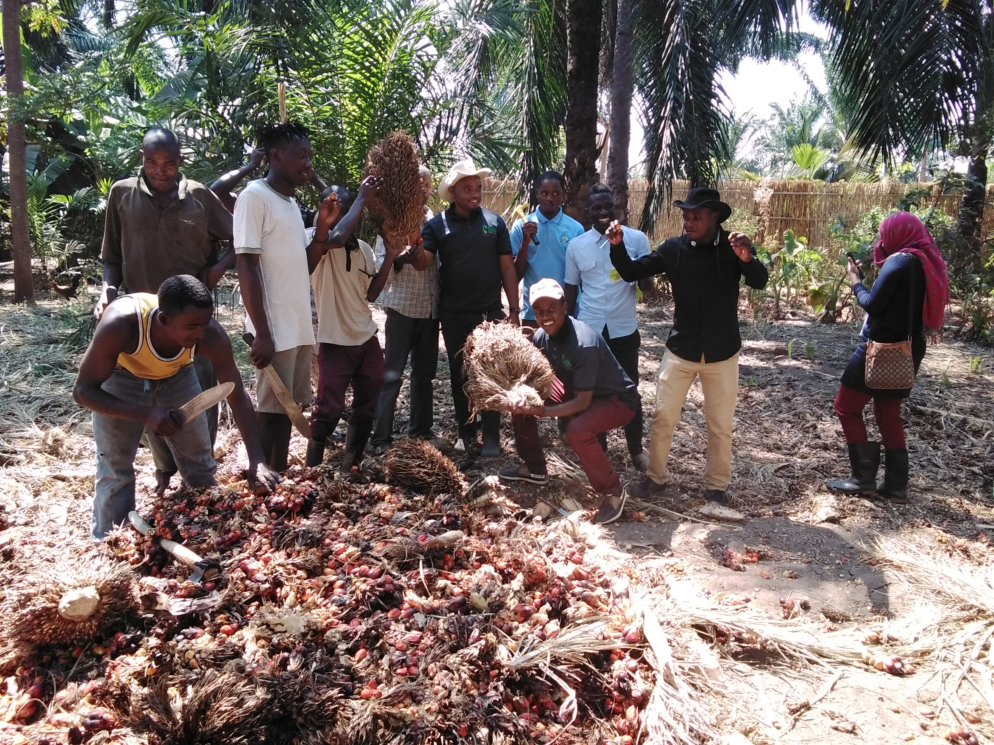 RESEARCHERS WITH OIL PALM FARMERS TOGETHER AFTER GETTING A  PISIFERA VARIETY DURING IDENTIFYING A PARENTAL MATERIALS IN TANGANYIKA IN KATAVI REGION