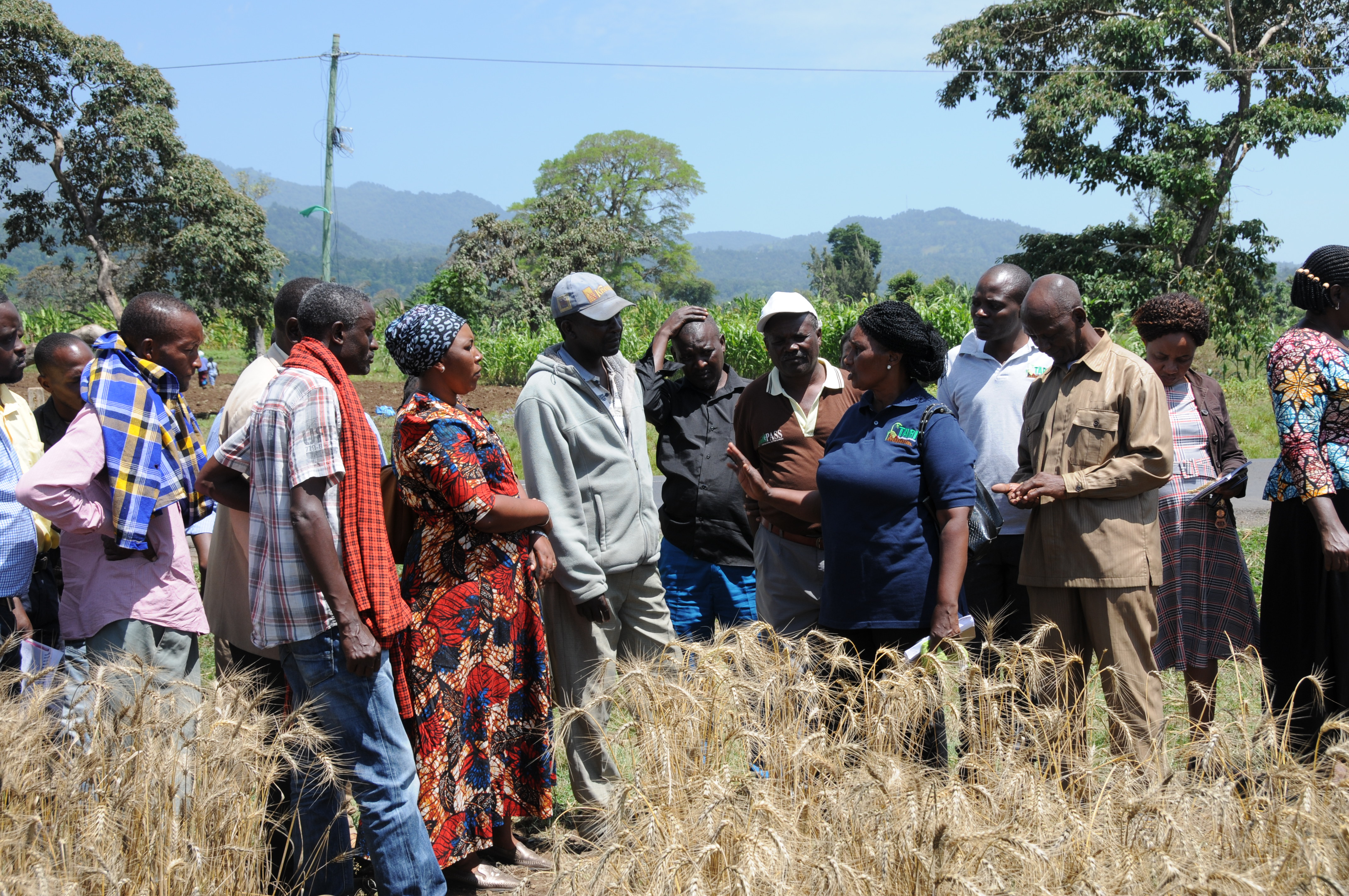 Ms. Salome Munisi, the head of wheat section-TARI Selian  clarifies some points to farmers during wheat field day at Madira, Arumeru District Arusha