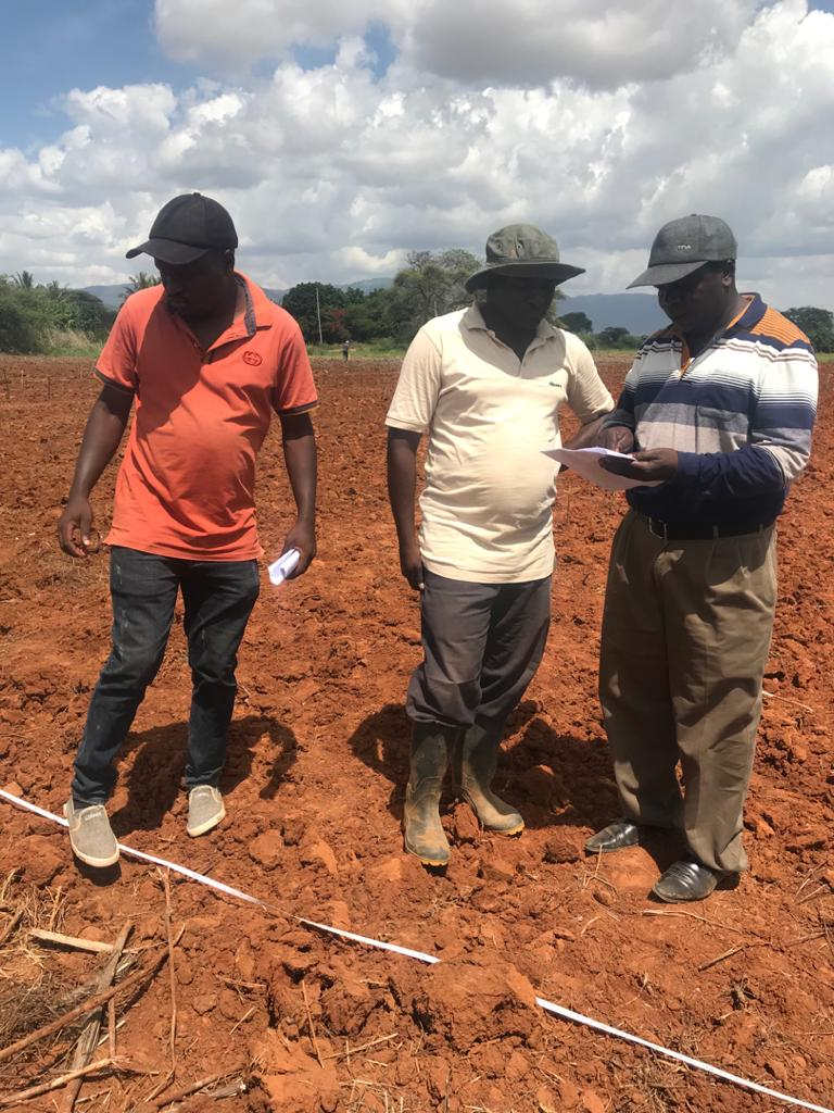 TARI HOMBOLO Scientist planning for trial establishment ( Field layout ) as pressure of climate that need timely planting that should be done on late December for better germination and vigorously plants. 26/12/2020.