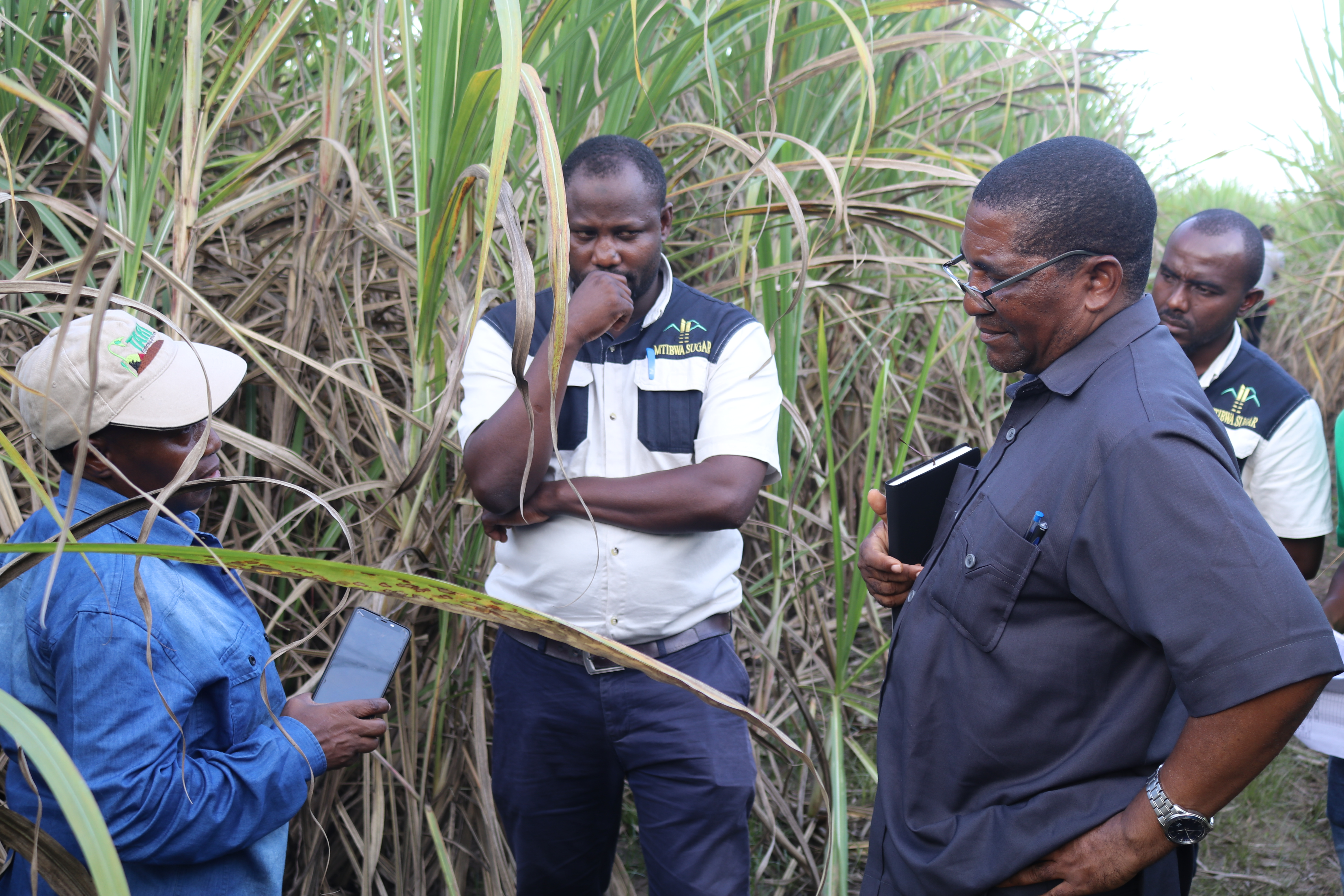 TARI DG, Dr. Geoffrey Mkamilo and TARI Kibaha management on their visit to Mtibwa Sugar Estates to get insight on the way TARI research is contributing to improving the production and productivity of sugarcane